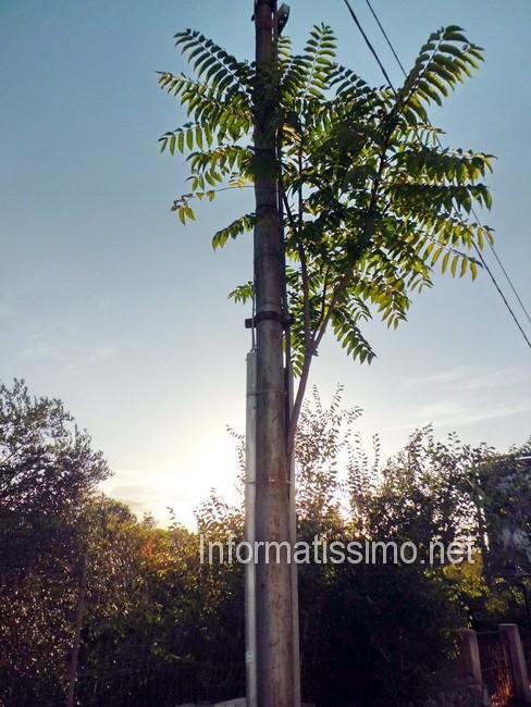 Albero_nel_palo_della_luce3