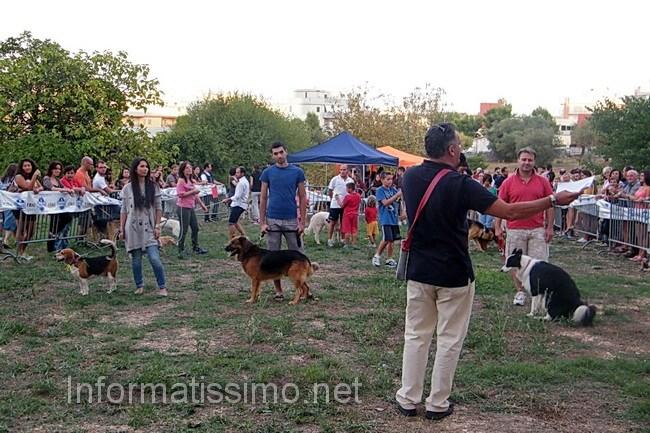 Dog__Cat_show_2012_2