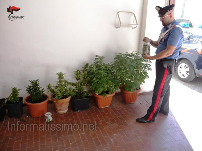 CC_Acquaviva_-_marijuana