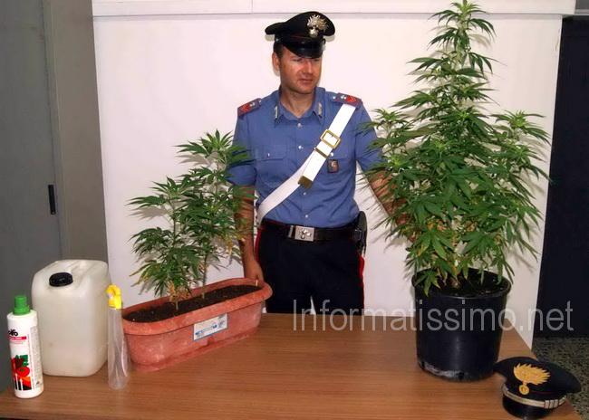 CC_Casamassima_marijuana