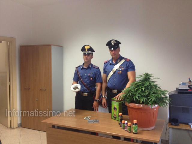 CC_Castellana_G_pianta__marijuana