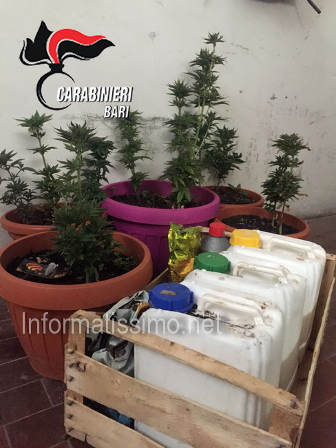 CC_Castellana_sequestro_cannabis_e_hashish