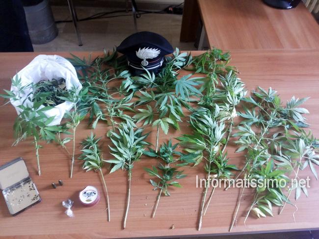 CC_Gioia_Marijuana