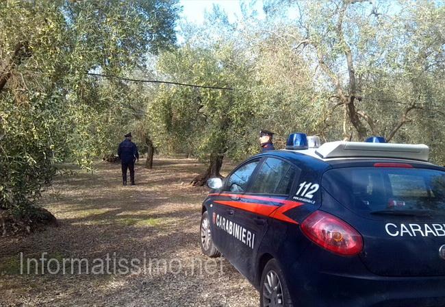 Carabinieri_Bari_furti_di_olive_controlli_nelle_campagne