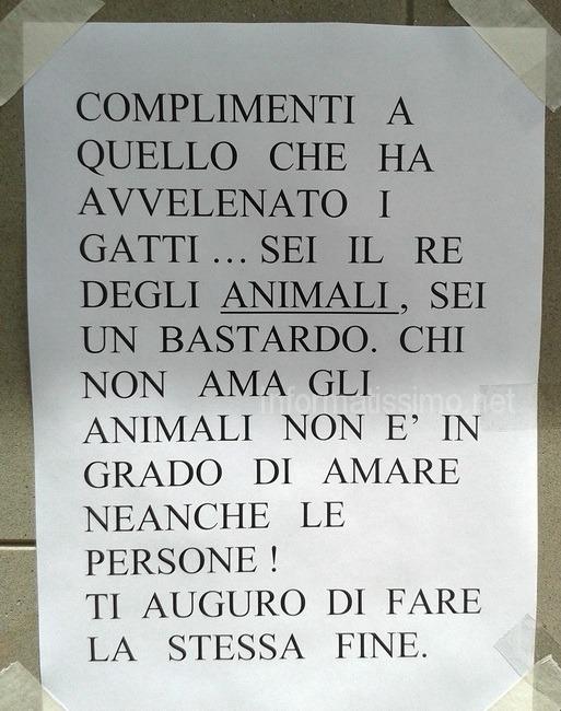 Gatti_avvelenati3