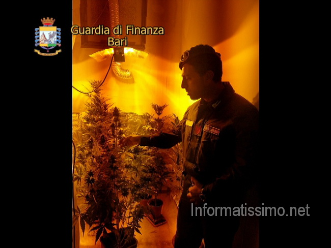 GdF_Conversano_sequestro_marijuana_low