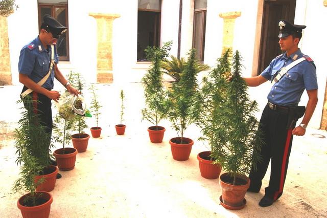 Gioia_del_Colle_cannabis_sequestrata