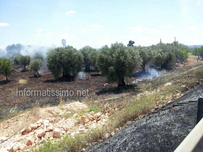 Incendio_sterpaglie_via_Castellana_2