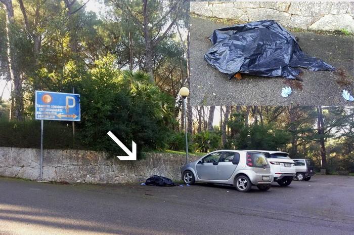 Lupo_morto_parcheggio_ex_sanatorio