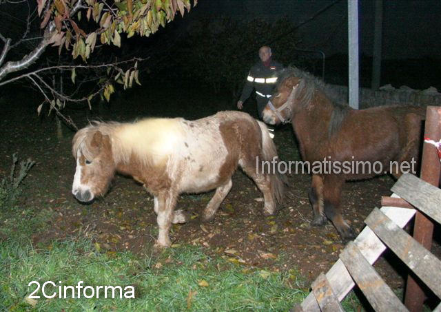 Salvataggio_Pony