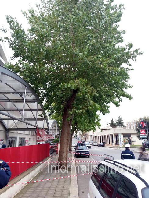 VVF_Famila_alberi_pericolanti