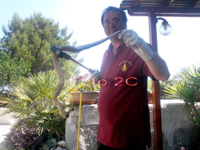 foto_2cinforma__serpente_recuperato_e_liberato_low