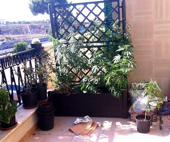 marijuana_rinvenuta_sul_balcone