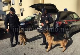 CC Unit Cinofile Arresti a Putignano